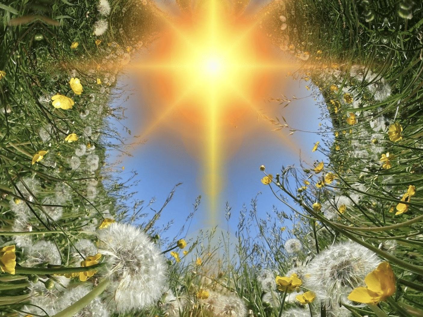 Nasce il tarassaco, la pianta del sole